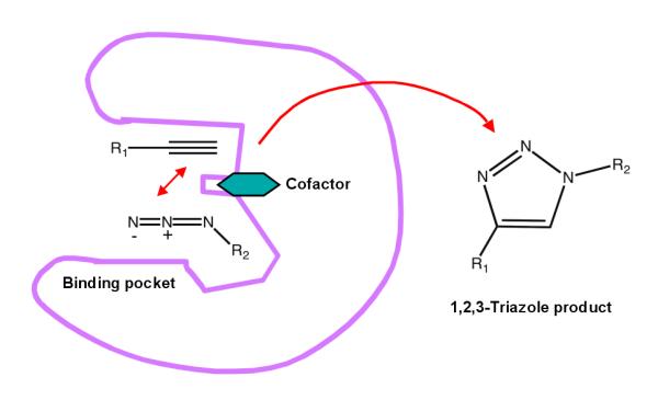 AlkyneAzideCat