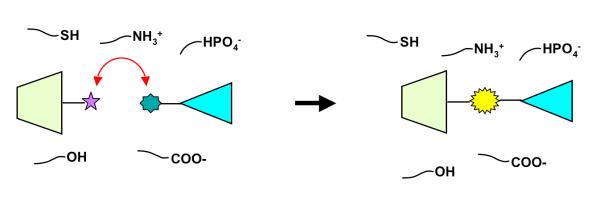 Biooorthog1