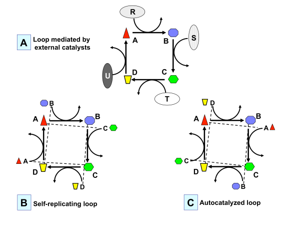 Fig.3-AutocatLoops