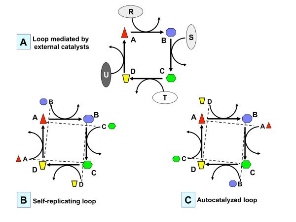 Fig.3-AutocatLoops