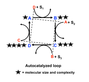 Fig.4-AutocatLoop&Cmpxty